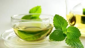 Teh Mint lagi ngetren tanam daun mint di rumah sendiri vebma