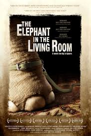 elephant in the living room documentary u2013 living room design