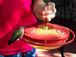 Jewel Box Window Hummingbird Feeder Hummingbird Activities For Kids Hummingbirds Hq