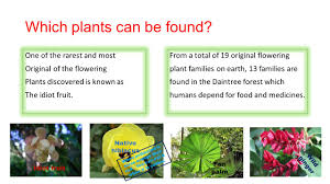 native plants in the tropical rainforest the daintree rainforest ppt video online download
