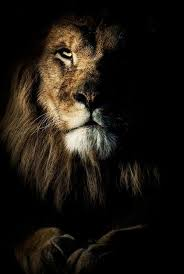 male lion wallpapers the 25 best lion pictures ideas on pinterest lion cat big eyed