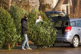 where to find the best live christmas trees in lubbock