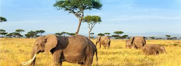 safari safari holidays 2017 2018 guardian holidays