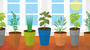 5 kitchen herbs for small garden spaces fix com