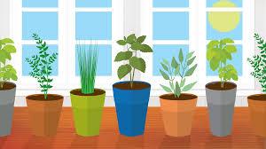 Indoor Kitchen 5 Kitchen Herbs For Small Garden Spaces Fix Com