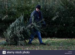 a man carries his own christmas tree after having it cut on wylds