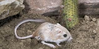 All Living Things Luxury Rat Pet Home by Kangaroo Rat