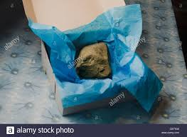 gift box tissue paper large rock in gift box with tissue paper stock photo 41354889 alamy