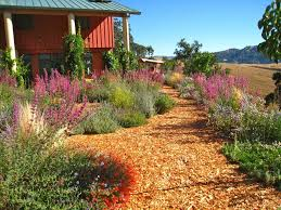 Best 25 California Native Landscape Ideas On Pinterest