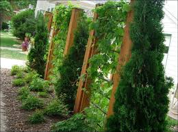Backyard Privacy Trees Privacy Fence Ideas With Trees Fence Gallery