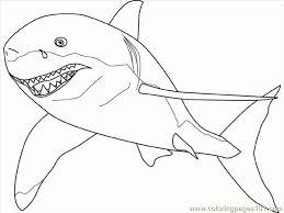 white shark pictures print ciespsantos