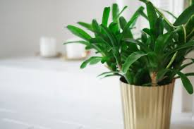 oh so many house plants u2026 u2013 poppy deyes