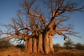 the legend of the tree eco products