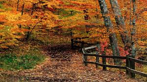 thanksgiving widescreen wallpaper forests trail gold fence path forest orange nature thanksgiving