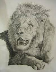 lion drawing by sunny22345 on deviantart