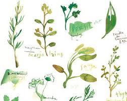 les herbes aromatiques en cuisine les plantes aromatiques dans la cuisine aquarelle affiche