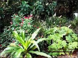 Tropical Landscape Design by 11 Best Tampa Landscape Design Tropical Oasis Images On Pinterest
