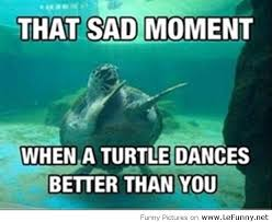 Funny Memes About Dancing - turtle dancing