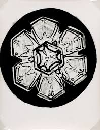 snowflake wilson bentley exhibition u0027cabinet of curiosities photography u0026 specimens u0027 at