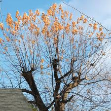 five common pruning mistakes and how to fix them gardening
