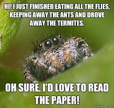 I Tried Killing A Spider - if there s a spider on my ceiling should i remove it or let it be