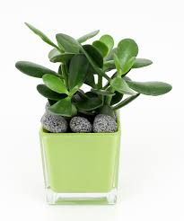 cactus green plant and succulent care currans flowers