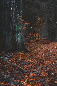 halloween forest background best 25 autumn forest ideas on pinterest fall trees fall
