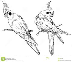 cartoon cockatiel cockatiel stock illustrations u2013 111 cockatiel stock illustrations