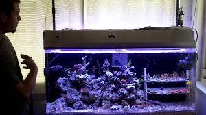 t5 aquarium light fixture ati light fixture review youtube