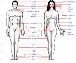 19 pdf bogglesworldesl respiratory system crosswords answers