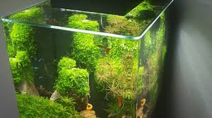 Fluval Edge Aquascape Example No 32564 From The Category Aquascaping