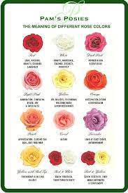 Different Color Roses Pam U0027s Posies In Dover Explores The Meanings Behind Different Color