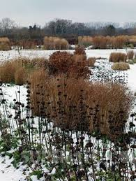 rhs wisley s glasshouse on a frosty winter s day gardens