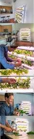 best 25 hydroponics at home ideas on pinterest home hydroponics