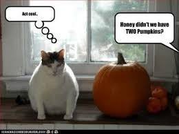 Halloween Cat Meme - cat ate pumpkin halloween alliance