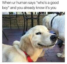Cute Best Friend Memes - dogs are a meme s best friend 30 pics funnyfoto funny pictures