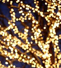 how to put lights on a tree outside etiquette expert william hanson reveals what christmas decorations