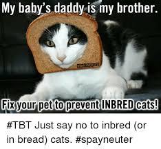 Cat Breading Meme - 25 best memes about in bread cat in bread cat memes