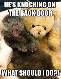 Stupid Sexy Meme - stupid sexy otter