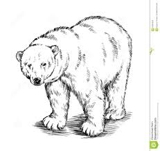 black and white engrave isolated vector bear stock vector image