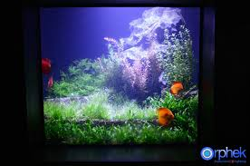 aquarium led lighting photos reef and planted aquarium gallery orphek