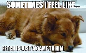 Golden Retriever Meme - sad golden retriever weknowmemes generator