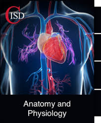Anatomy And Physiology Dictionary Free Download Anatomy And Physiology Free Course By Coppell Independent