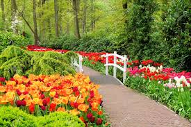 keukenhof flower gardens walkway through spring flowers at keukenhof gardens netherlands