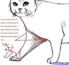 2 how to draw a realistic cat
