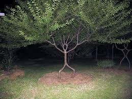 file person tree jpg wikimedia commons
