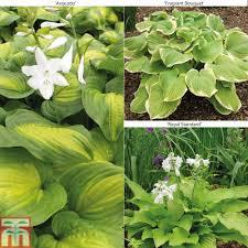 standard plants at thompson morgan