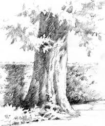 76 best pencil drawing of trees images on pinterest drawing