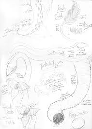 tentacle types reference sheet by ziarenete13x on deviantart