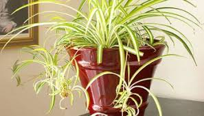 indoor plants that don t need sunlight 15 plants that grow without sunlight bless my weeds